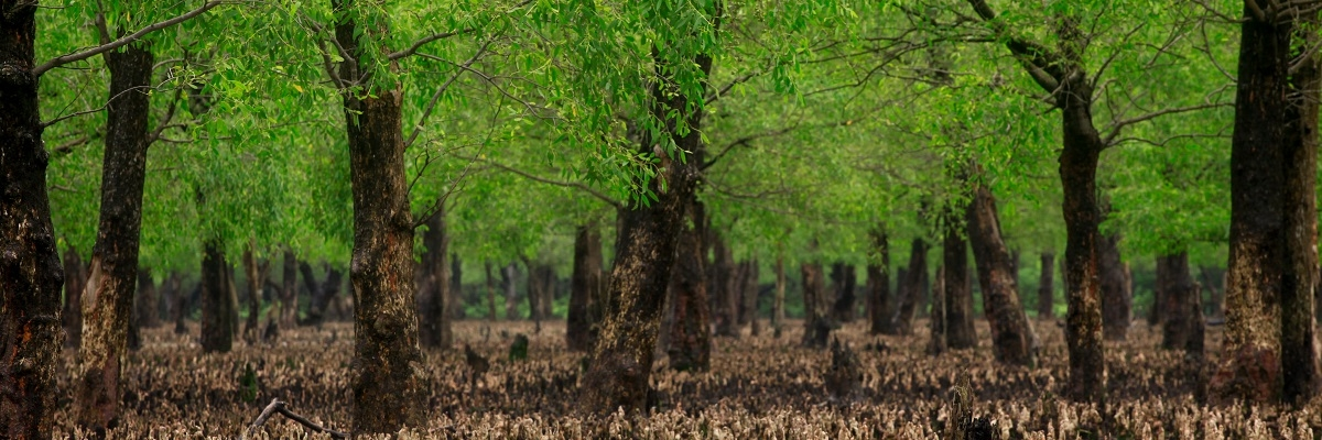 Adaptation Fund Climate Innovation Accelerator – UNEP-CTCN